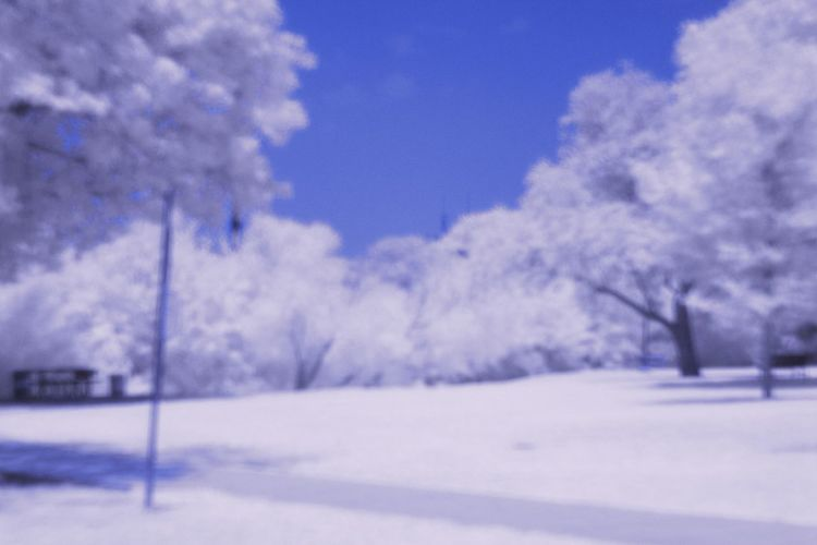 Infrared Infrared Photography IR Ir Photography No People Park Red Trees
