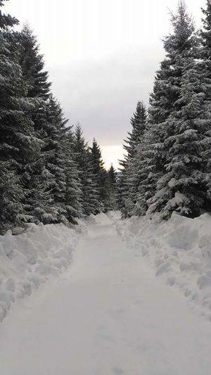 Trabzon Snow ❄ Akçaabat Manzara 😊 61 Karadeniz Kar Kış Balıklı Yaylası