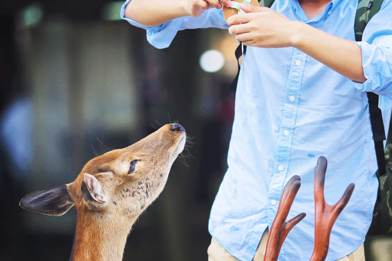 Feeding Deer Animals In The Wild Avian Bird D Day Eating Feeding  Focus On Foreground Holding Human Finger Nara,Japan One Animal Part Of Person Wildlife Zoology