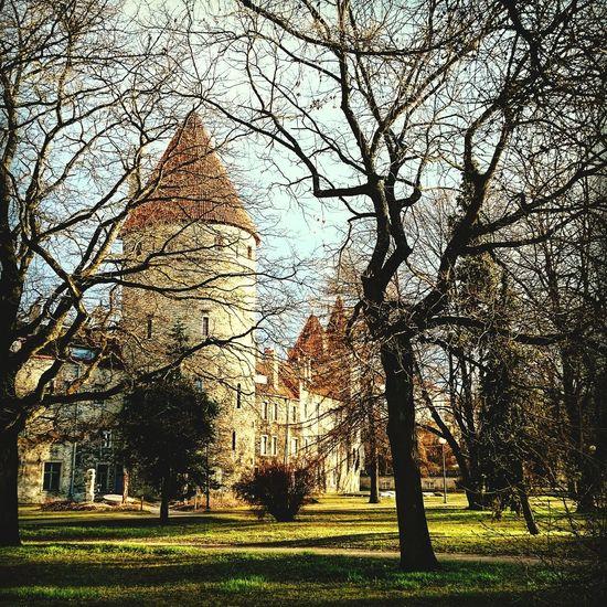 Tallinna Old Town Medieval Architecture Visittallinn Ilovetravelling  mypathsarebeautiful 💚 Medieval Town Estonian History
