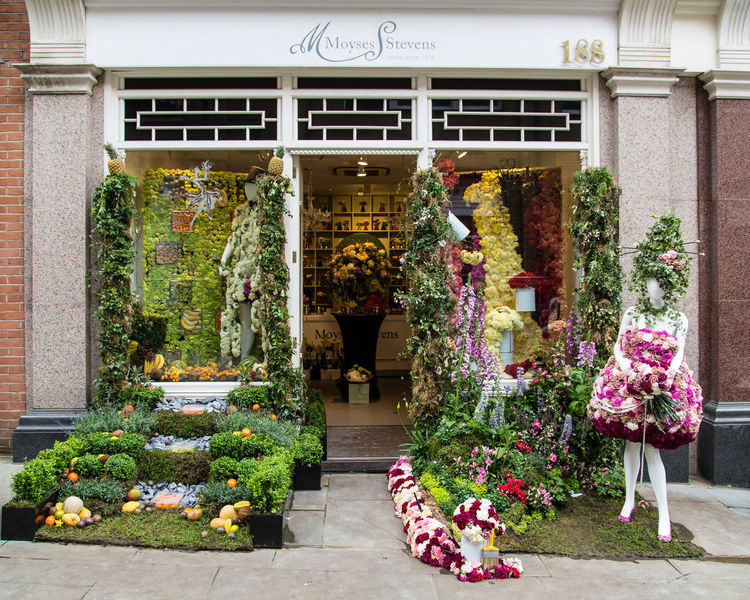 Decoration Chelsey Flower Show Architecture Arragements Blooming Chelsea Decoration Entrance Flower Flowers Green Historic London Picoftheday Shopping Show Winter
