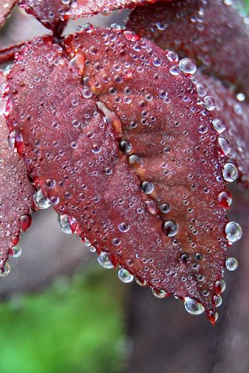 Close-up Detail Dew Digboi Drop Droplet Freshness Incredible India India Nature Red Water Wet