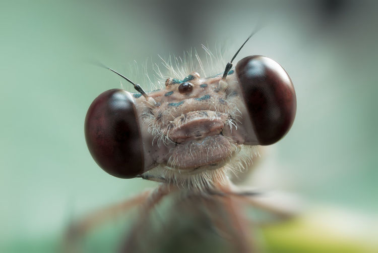 Extreme close-up of damselfly