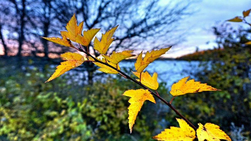 Yellow leaves If Trees Could Speak Human Vs Nature Nature Photography EyeEm Gallery Desks From Above Learn & Shoot: Leading Lines EyeEm Best Shots - Nature EyeEm Nature Lover No People Autumn Colors My Planet Is Beautiful Autumn Leaves Autumn Collection