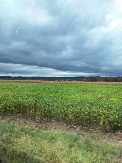 Foreboding Clouds over a Field of Soybeans Foreboding Stormy Sky Soybean Field EyeEm New Jersey EyeEm Gallery The Purist (no Edit, No Filter) Smartphone Photography From A Moving Vehicle Android Photography Huawei Shots
