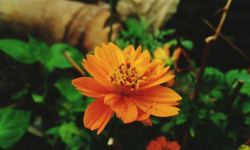 I love it. Flowers First Eyeem Photo