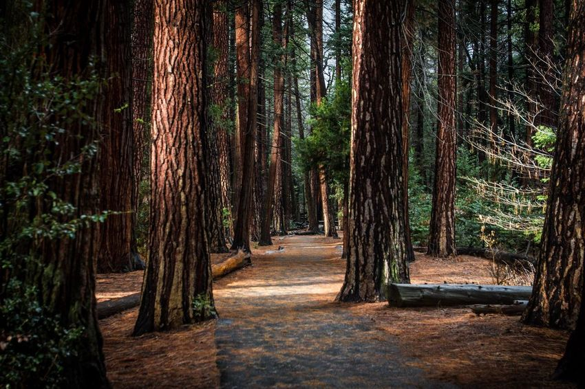 A walk in the forrest Tree Plant Forest Tree Trunk Trunk Growth Beauty In Nature WoodLand Direction Non-urban Scene Scenics - Nature Tranquil Scene Outdoors No People Land Day Tranquility The Way Forward Nature Footpath