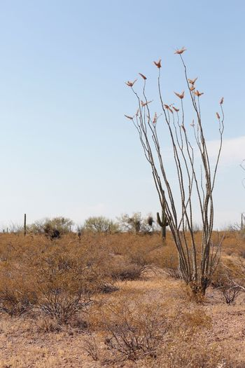 EyeEm Selects Bare Tree Nature Day Landscape Arid Climate Outdoors Dead Plant Clear Sky Tree No People Desert Tranquility Plant Beauty In Nature Scenics Dead Tree Sky JGLowe Desert Beauty Desert Tranquil Scene