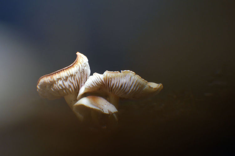 Close-Up Of Mushrooms