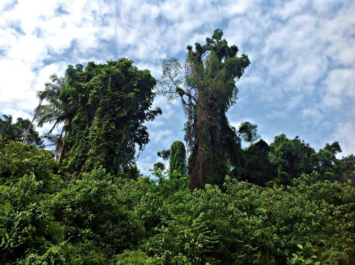 Low Angle View Of Trees Growing Against Sky