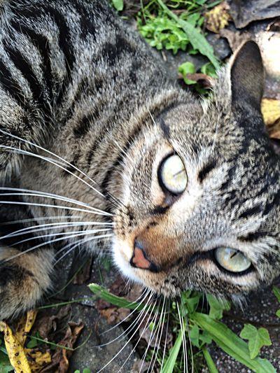 McDonald <3 Cat Kitten Lovers Animals