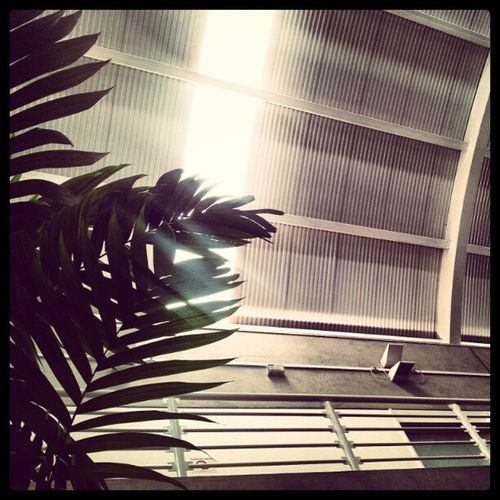 Igerscampinas Instagram Instagalleries Instagallerys perspective