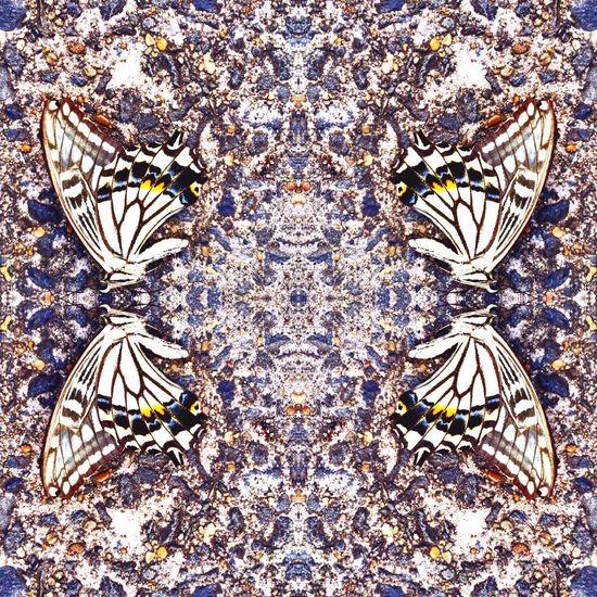 Asfalto Butterfly