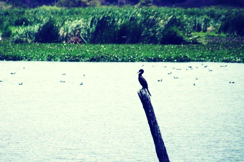 Bird Animals In The Wild Animal Themes Water One Animal Beak Tranquil Scene Iguatu Ceará-Brasil Iguatu-ce Brasil ♥ Ceará Eyeemphoto Brazil Tranquility Sky Landscape Environment