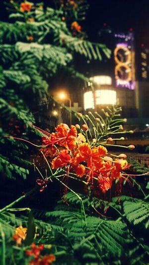 Taking Photos Studiocity Red&green Macau Night