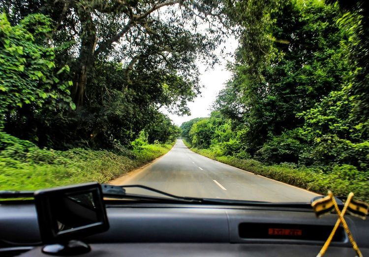 Transportation Tree Plant Car Mode Of Transportation Motor Vehicle Land Vehicle Windshield Road Vehicle Interior Transparent Glass - Material Car Interior Growth Nature Day No People Green Color on the move The Way Forward Diminishing Perspective Car Point Of View Outdoors Road Trip