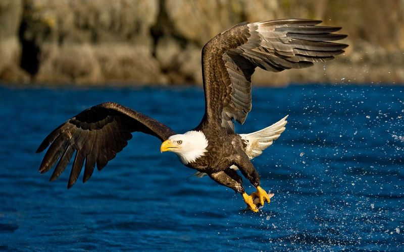 Close-up of eagle flying over lake