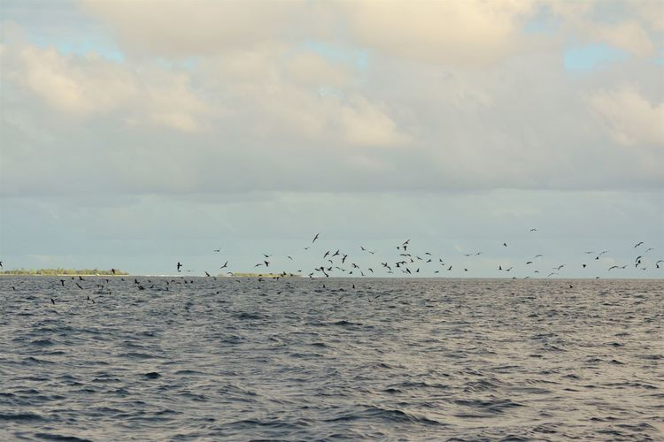 Birds on action..getting their food.. Animals In The Wild Day Sea Flock Of Birds Sky Flying Horizon Over Water Takingphotos Taking Photos Take Photos Spread Wings My Maldives Maldives Sunny Side Of Life Bird Water