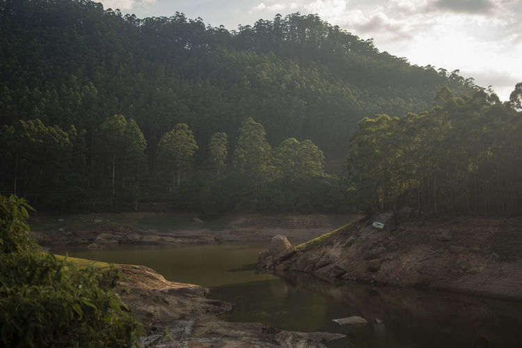 A forest near Munnar Forest India Kerala Trees River Riverside Sunset Outdoors