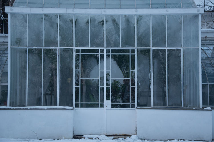 Greenhouses in winter III Palm Tree Glass - Material Window Reflection Cold Temperature Transparent Through Glass Plant Greenhouse Reflection Glass Steam Silhouette Winter Blue Hour Traveling Travel Photography Plant Life
