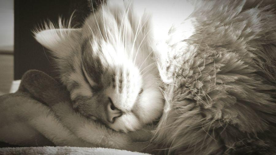 My sleeping beauty! First Eyeem Photo