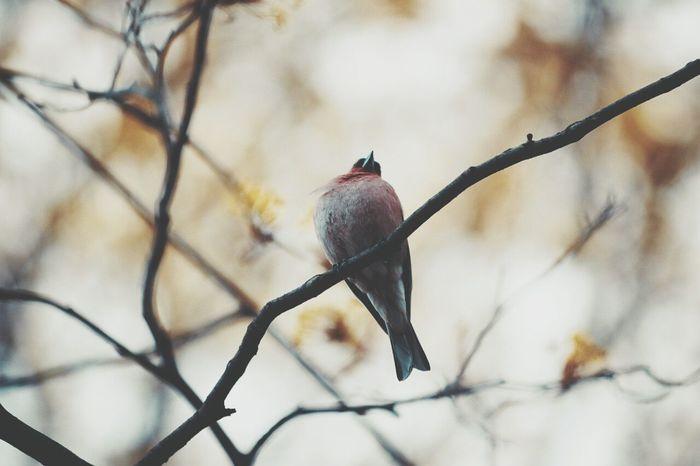 Hello World Nature Bird