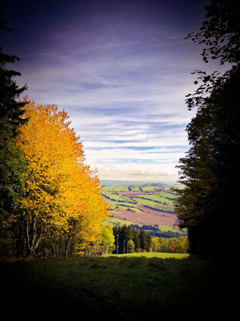 Heimatliebe ErzgebirgeTree Multi Colored No People Outdoors Beauty In Nature Nature SkyField Indiansummer The Week On EyeEm The Great Outdoors - 2017 EyeEm Awards Tranquil Scene Landscape