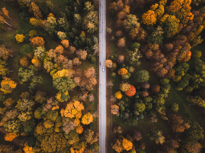High angle view of autumnal trees