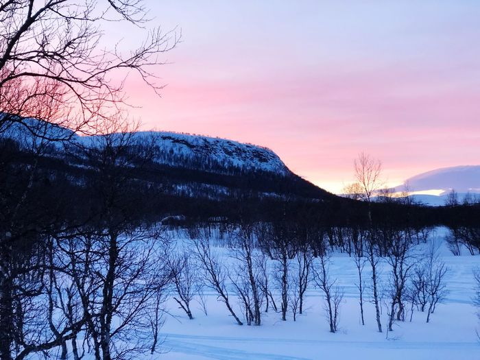 Winter Xcskiing Tree Sky Winter Snow Cold Temperature Sunset