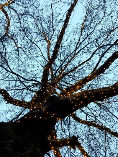 Tree with