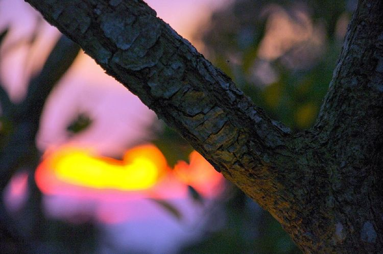 Tagaytay, 2010 Tree Tree Trunk Outdoors Close-up No People Day Nature Flower Pentax K20d Tagaytay Philippines Branch Branches And Sky Sunset Sunset_collection Dramatic Sky