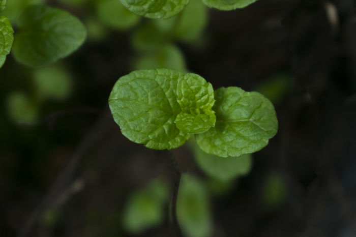 Beauty In Nature Close-up Day Focus On Foreground Fragility Freshness Green Color Growth Leaf Nature No People Outdoors Plant