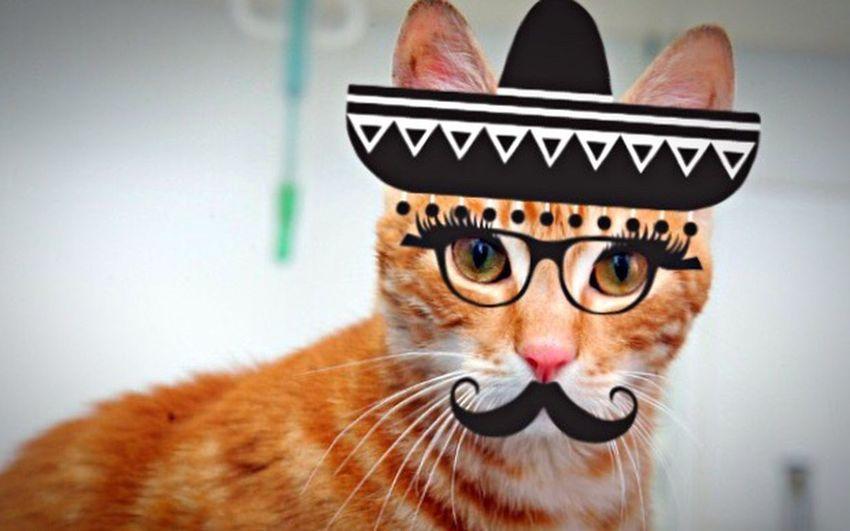 قطط المكسيك First Eyeem Photo