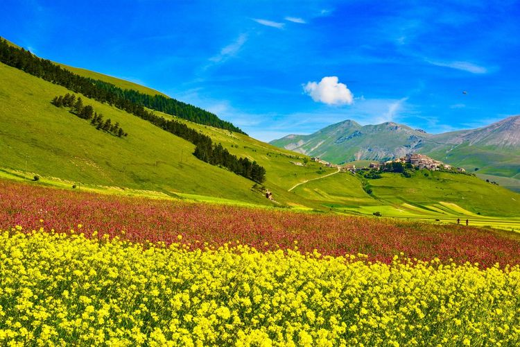 Abundance Agriculture Beauty In Nature Blooming Castellucciodinorcia Field Fioritura Flower Fragility Freshness Growth Landscape Mountain Mountain Range Nature Norcia Plant Rural Scene Scenics Sky Tranquil Scene Tranquility Yellow
