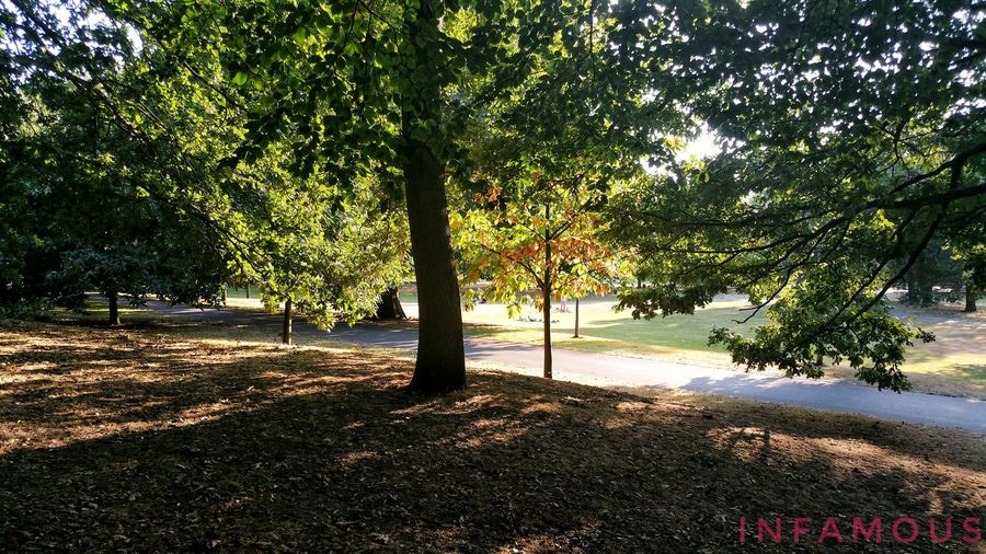 Taking a stroll through the park 😊 Tree Park - Man Made Space Nature Green Color Park Outdoors Footpath Photography Infamous Sunlight Shadows