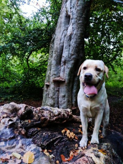 EyeEm Selects Dog Pets Domestic Animals Tree One Animal Animal Themes Tree Trunk Mammal Outdoors Day Nature Sitting No People Looking At Camera Panting Portrait