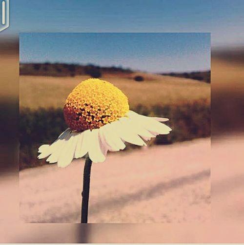 Summer Views Summer Flowers First Eyeem Photo