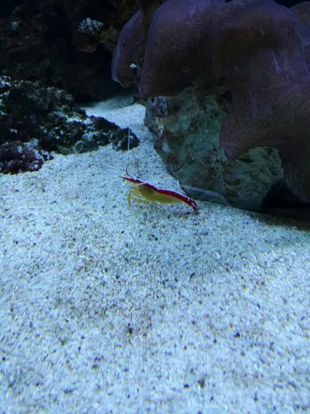 yammy shrimp Siam Ocean World
