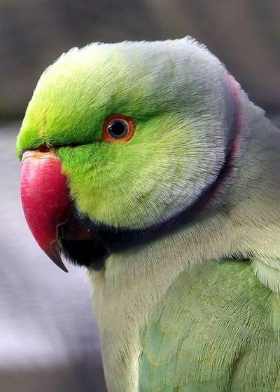 Pretty bird at