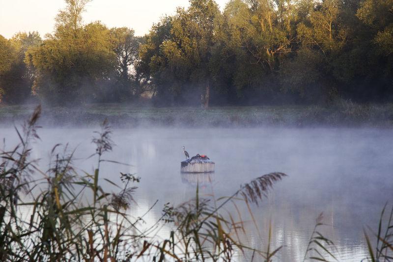 Birds Of EyeEm  Frog Loire Morning Trees Brouillard Matinal Martiniere River