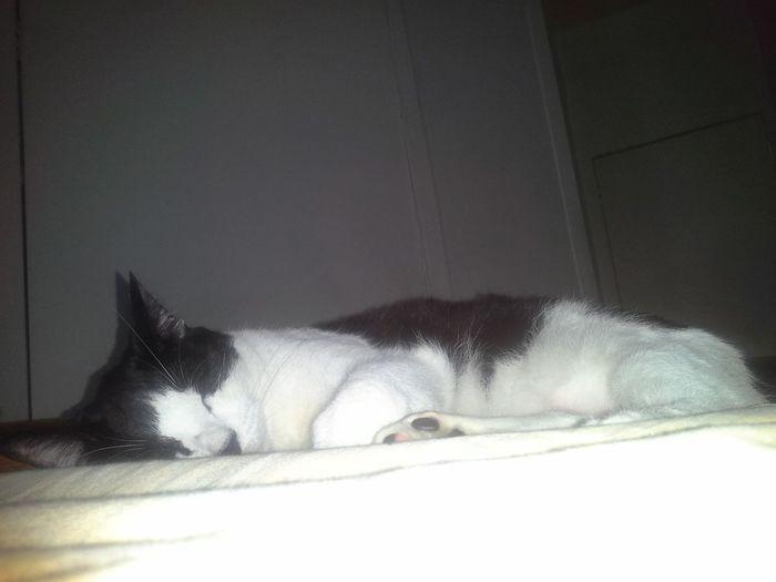 My Cat Oreo Was Sleep