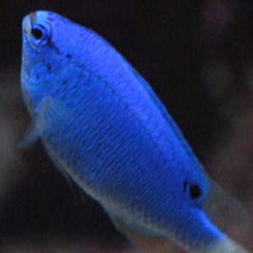 I Want This Fish!