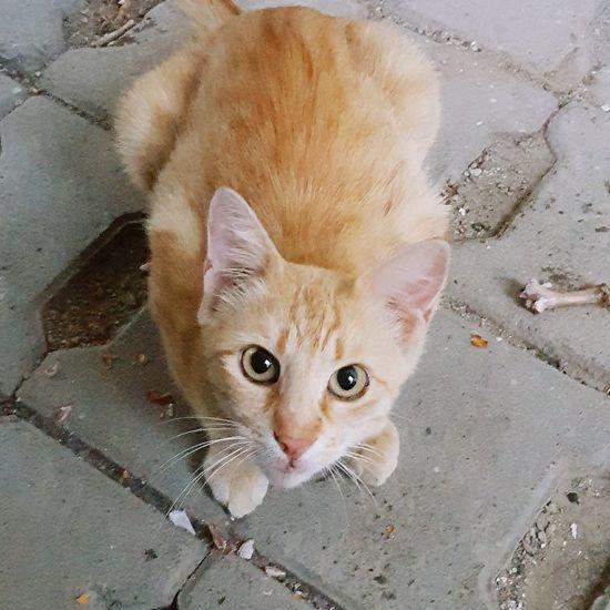 Kedi Aşkı Kedi Kedicik Kedidir Kedi Kediler Kedicik 🐈 Kediliev