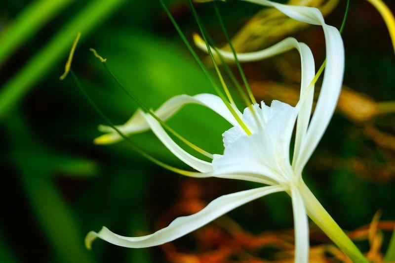 Flower 2 Flower