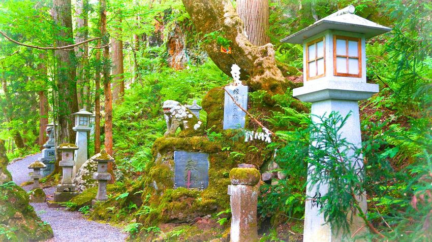 Stone lanterns (ishidoro) on a forest trail. Beauty In Nature Day Forest Forest Path Forestwalk Green Color Ishidoro Japan Lush Foliage Nature Outdoors Plant Stone Lantern Tranquility Tree Ultimate Japan Sakuramatsu Iwate