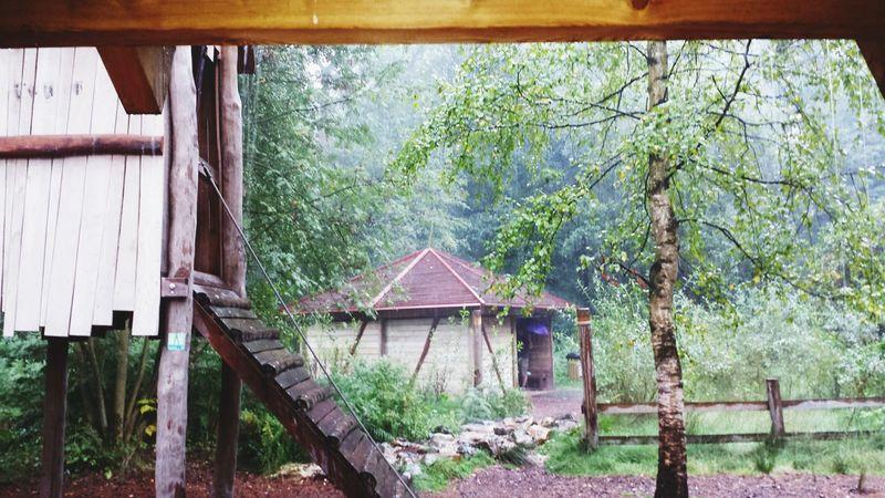 Rain Nature Naturelovers Beautiful Nature Bokrijk Genk Boomhut Trees Treehouse Green