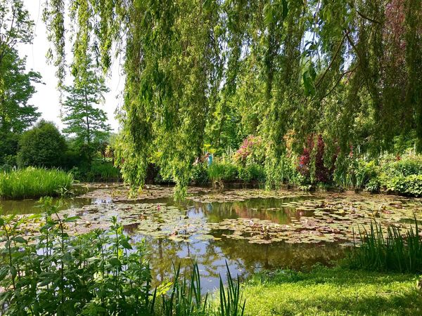 Tree Water Tranquil Scene Tranquility Reflection Lake Growth Scenics Tree Trunk Nature Beauty In Nature Green Color Non-urban Scene Green Day No People Majestic Countryside Freshness WoodLand Monet Garden Waterlilies Impressionism Fresh On Eyeem