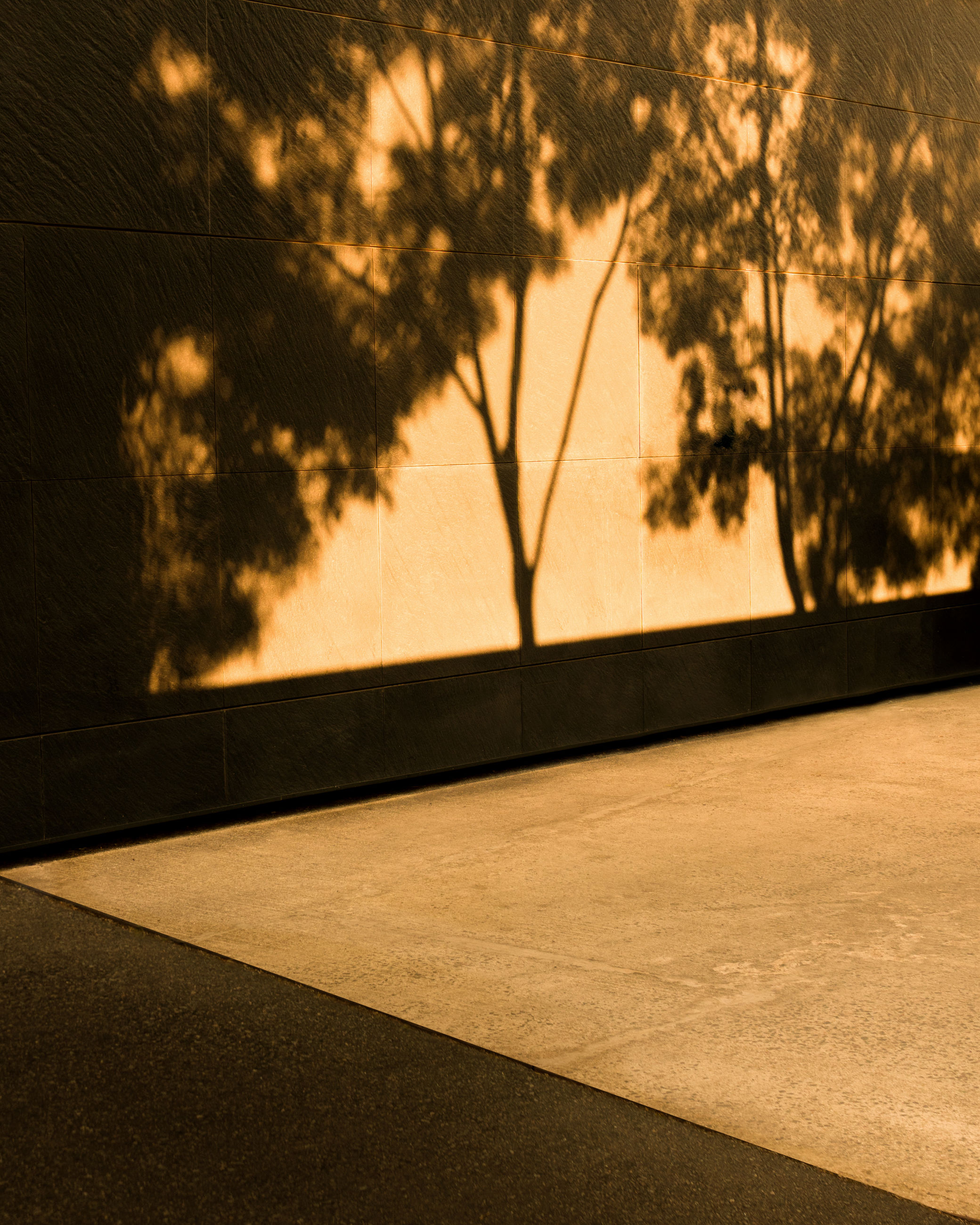 tree, plant, no people, nature, architecture, wall, outdoors, built structure, sunlight, absence, silhouette, sunset, wall - building feature, shadow, sky, building exterior, footpath, window, focus on foreground, empty