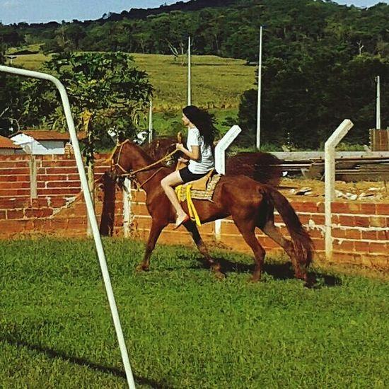 Summer Horse Férias Cavalo