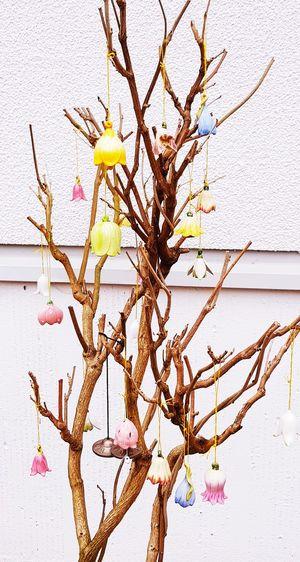 noch ein bisschen Osterschmuck ein bisschen eine andere Art Schmücken Dekoidee Tree Close-up Sky Plant